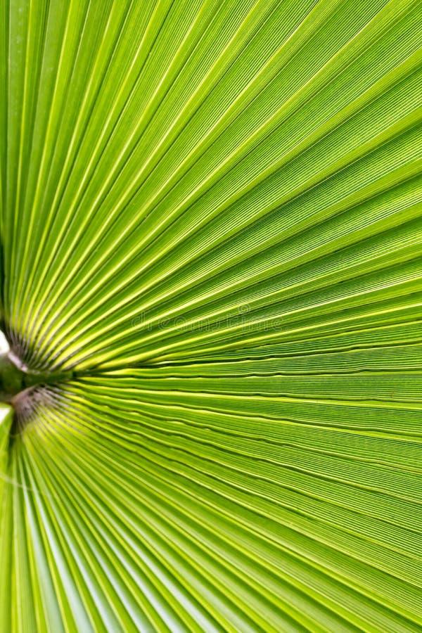 Φρέσκο πράσινο φύλλο φοινικών λεπτομερές ανασκόπηση floral διάνυσμα σχεδίων Κάθετη εικόνα στοκ φωτογραφία με δικαίωμα ελεύθερης χρήσης