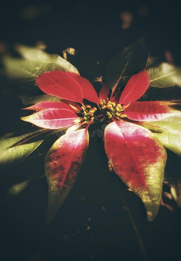 Φύλλα με τον κόκκινο και πράσινο συνδυασμό χρώματος στοκ εικόνα με δικαίωμα ελεύθερης χρήσης
