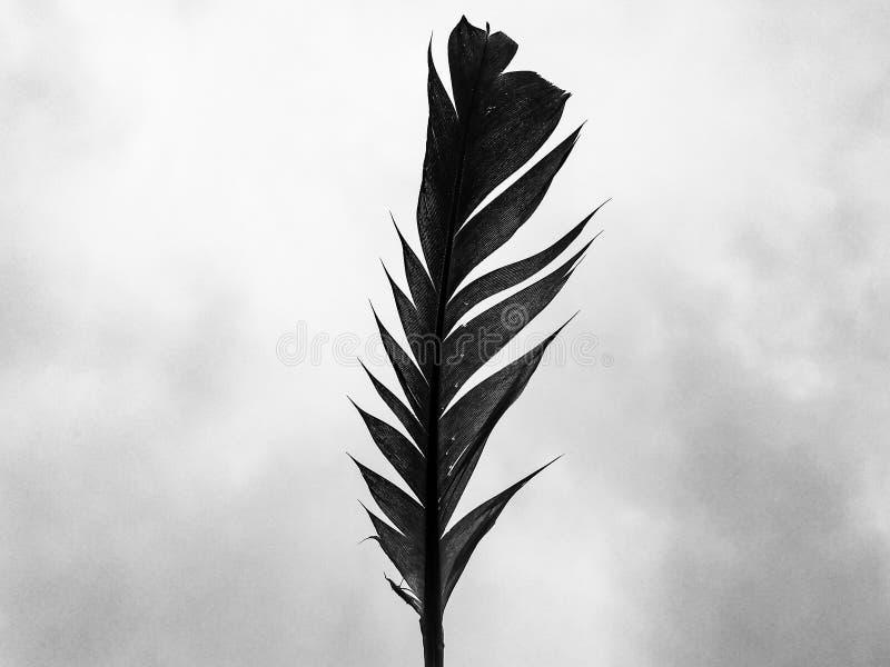 Φτερό ενός περιστεριού στοκ φωτογραφία με δικαίωμα ελεύθερης χρήσης