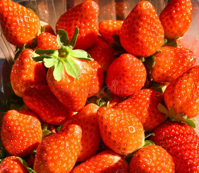 φυσικές και φρέσκες κόκκινες φράουλες σε έναν πίνακα έτοιμο να φάει στοκ εικόνα