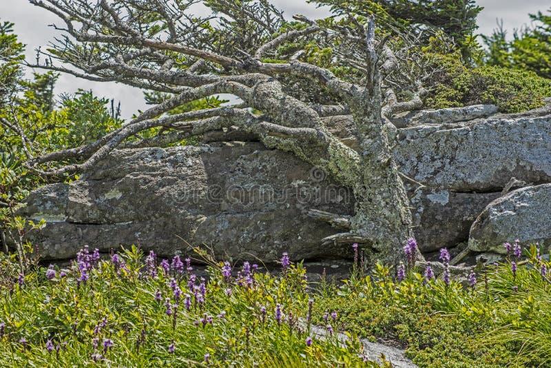 Φυσική άποψη ενός λίθου και των wildflowers στο κρατικό πάρκο βράχου καπνοδόχων στοκ φωτογραφίες