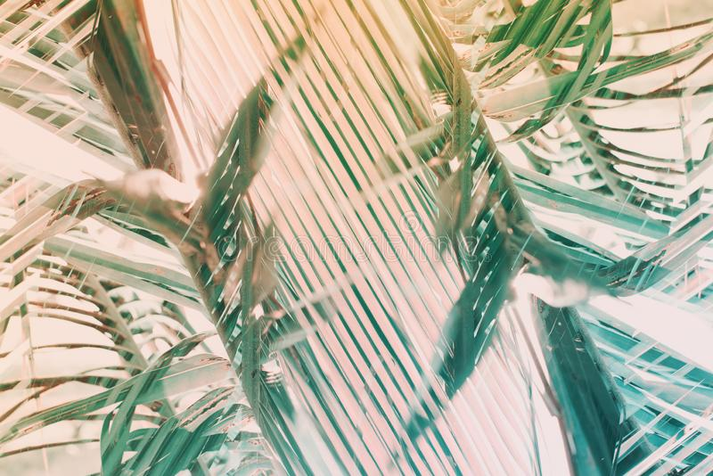 Φυσικό γεωμετρικό σχέδιο φοινικών τέχνης ντεκόρ που τονίζεται στοκ φωτογραφία με δικαίωμα ελεύθερης χρήσης