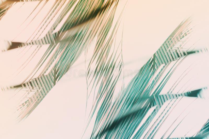 Φυσικό γεωμετρικό σχέδιο φοινικών τέχνης ντεκόρ που τονίζεται διανυσματική απεικόνιση