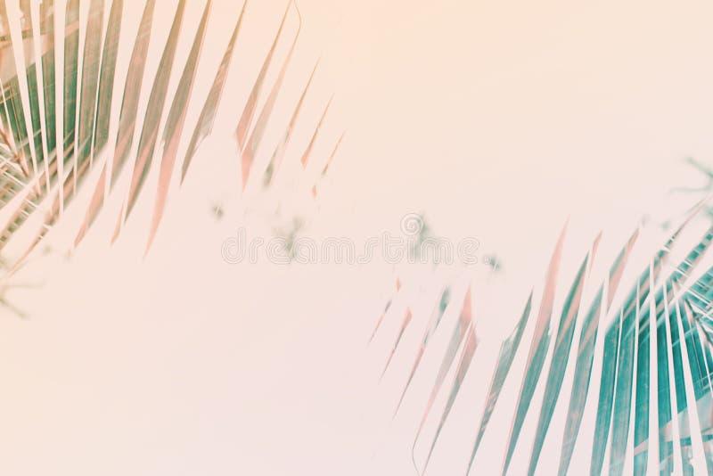 Φυσικό γεωμετρικό σχέδιο φοινικών τέχνης ντεκόρ που τονίζεται απεικόνιση αποθεμάτων