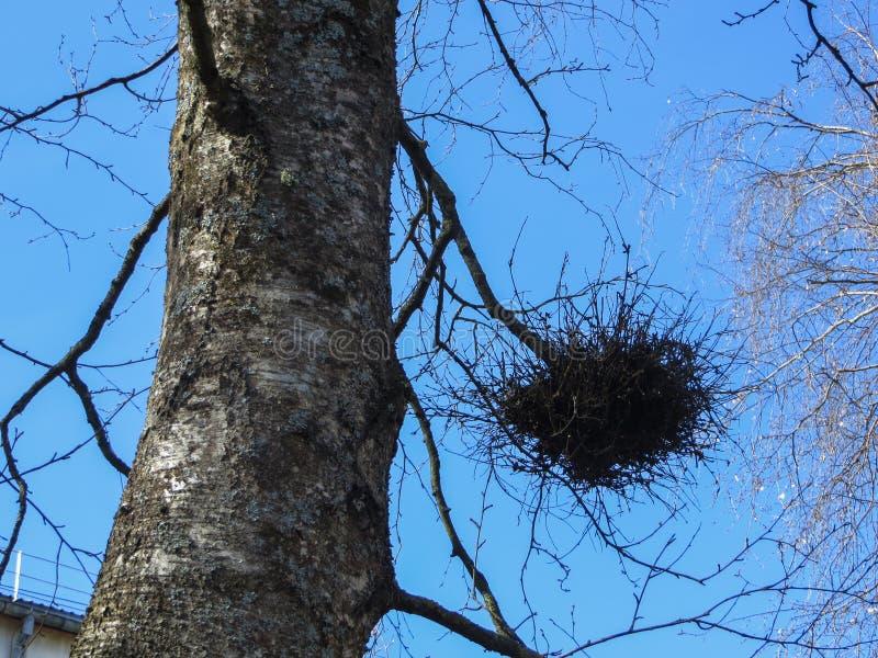 Φωλιές των πουλιών από τους κλαδίσκους στους κλάδους δέντρων στοκ φωτογραφίες με δικαίωμα ελεύθερης χρήσης