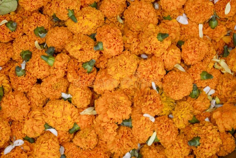 Φωτεινό φρέσκο πορτοκαλί Marigold λουλουδιών σε μια κινηματογράφηση σε πρώτο πλάνο σωρών φυσική σύσταση επιφάνειας στοκ εικόνες