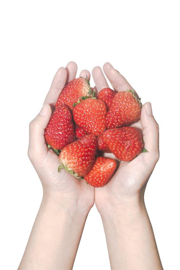 Χέρια γυναικών κινηματογραφήσεων σε πρώτο πλάνο που κρατούν τις φράουλες στο άσπρο υπόβαθρο στοκ φωτογραφία με δικαίωμα ελεύθερης χρήσης