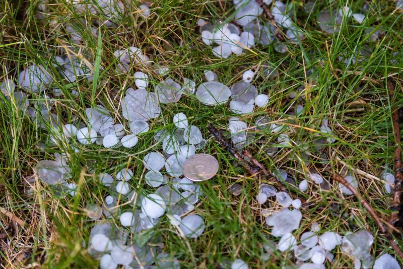 Χαιρετήστε το μέγεθος ενός νομίσματος πέντε-ρουβλιών μετά από μια καταιγίδα, Kaliningrad, Ρωσία στοκ εικόνα