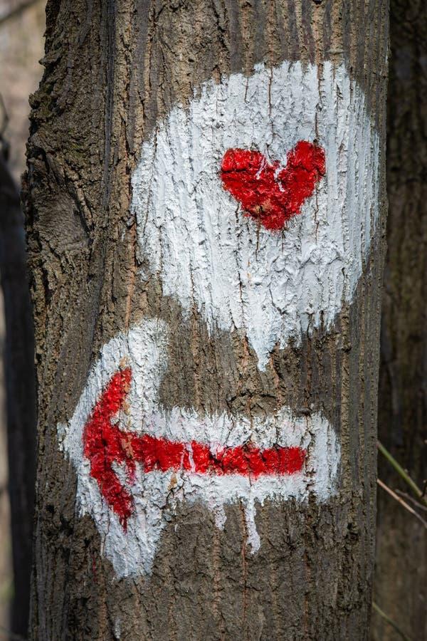 Χαρακτηρισμός πεζοπορίας σε ένα δέντρο στα ξύλα στοκ φωτογραφίες με δικαίωμα ελεύθερης χρήσης