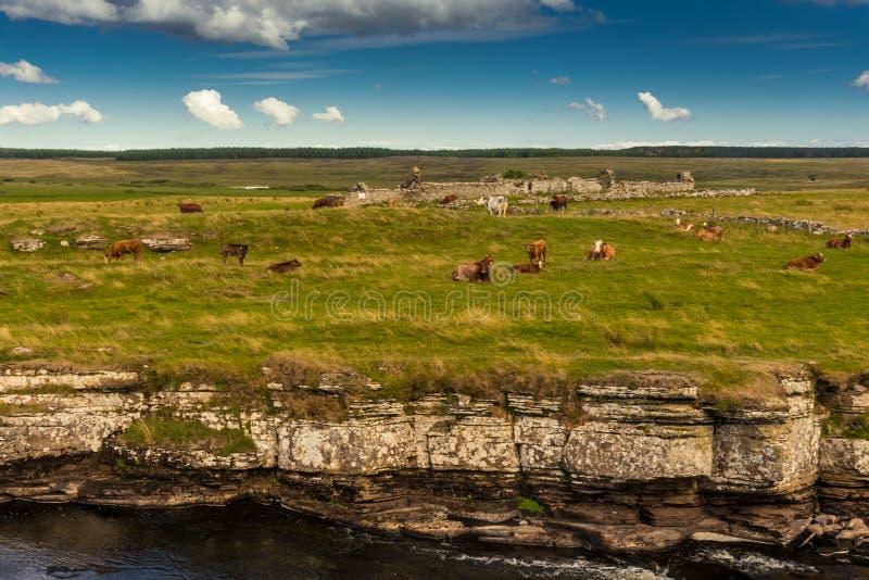 Χαρακτηριστικό, αγροτικό τοπίο στο σκωτσέζικο Χάιλαντς στοκ φωτογραφίες