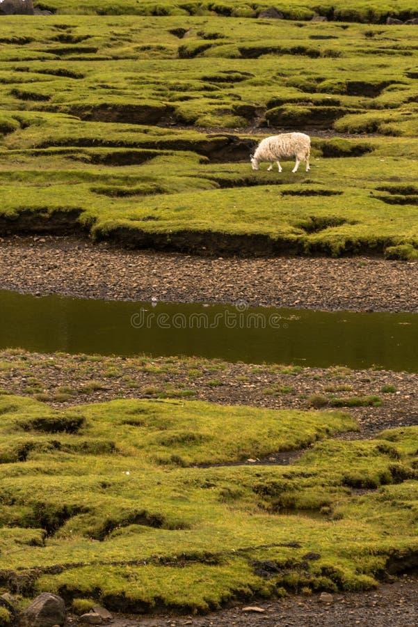 Χαρακτηριστικό, αγροτικό τοπίο στο σκωτσέζικο Χάιλαντς στοκ εικόνα