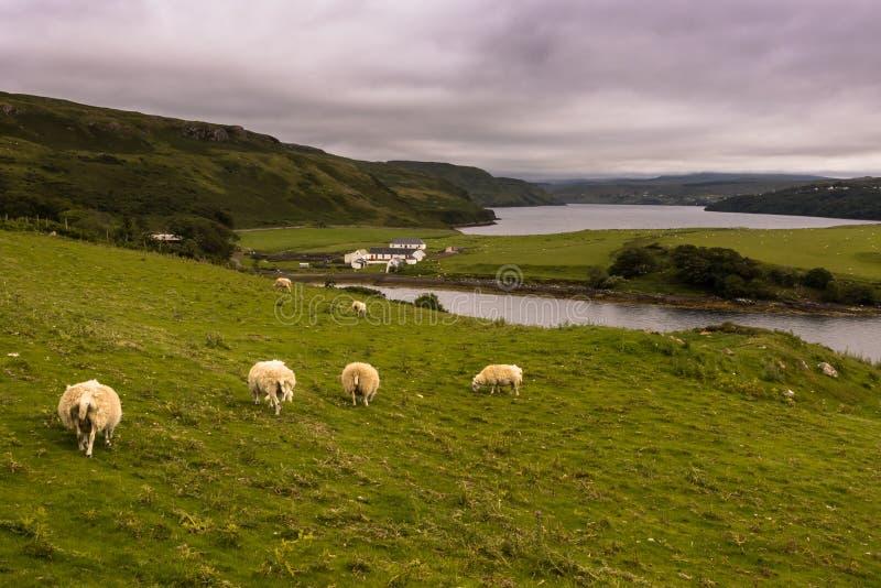 Χαρακτηριστικό, αγροτικό τοπίο στο σκωτσέζικο Χάιλαντς στοκ φωτογραφίες με δικαίωμα ελεύθερης χρήσης