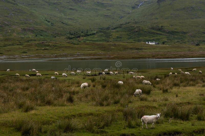 Χαρακτηριστικό landscapeof το νησί Mull, εσωτερικό Hebride στοκ εικόνες με δικαίωμα ελεύθερης χρήσης