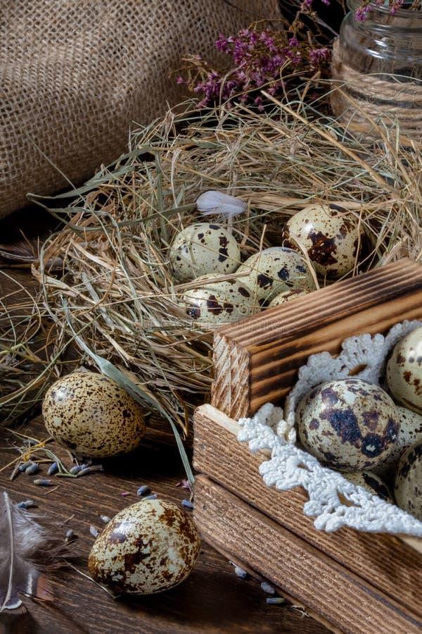 Χαριτωμένη ακόμα ζωή με τα αυγά ορτυκιών Αυγά ορτυκιών στη φωλιά και στον παλαιό ξύλινο πίνακα στη σιταποθήκη μεταξύ των εκλεκτής στοκ φωτογραφίες