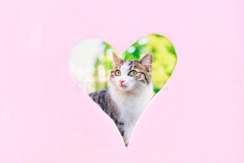 Χαριτωμένη γάτα στη μορφή καρδιών Έννοια της αγάπης για τα κατοικίδια ζώα Υπόβαθρο κρητιδογραφιών, διάστημα αντιγράφων στοκ εικόνες