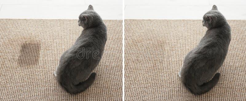 Χαριτωμένη γάτα στον τάπητα στοκ φωτογραφία με δικαίωμα ελεύθερης χρήσης