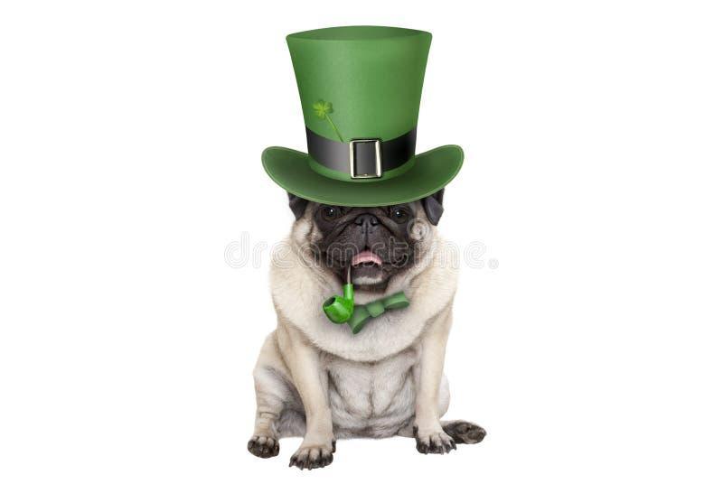 Χαριτωμένη συνεδρίαση σκυλιών κουταβιών μαλαγμένου πηλού ημέρας χαμόγελου ST patricks κάτω με το πράσινους τοπ καπέλο και το σωλή στοκ φωτογραφία