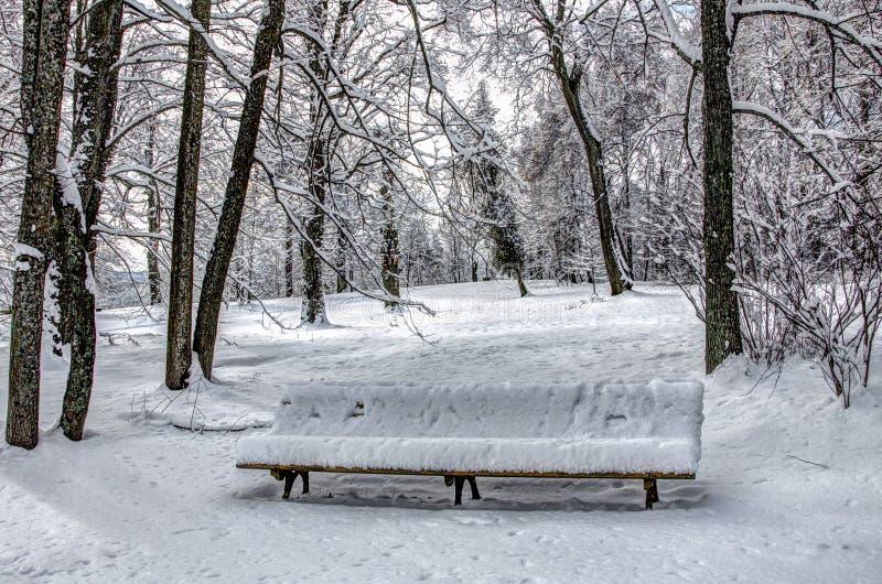 Χειμερινή μεσημβρία στο πάρκο στοκ φωτογραφίες με δικαίωμα ελεύθερης χρήσης