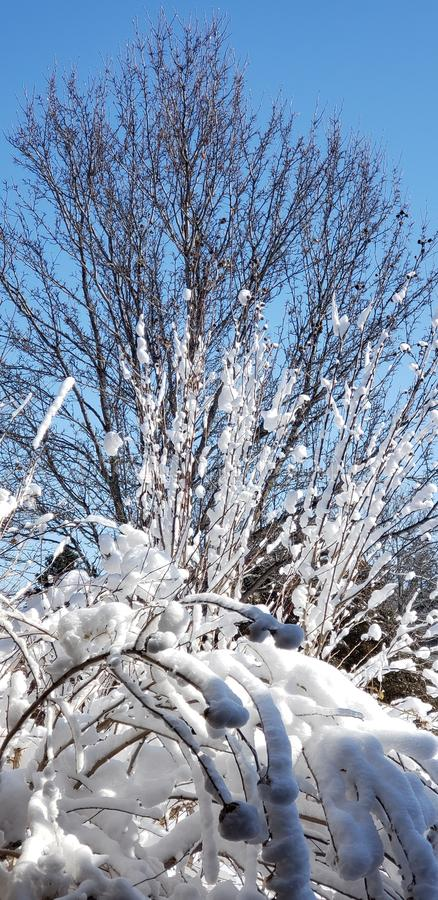 χειμώνας μπλε ουρανού στοκ φωτογραφίες με δικαίωμα ελεύθερης χρήσης