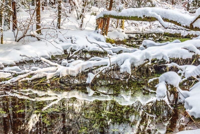 Χιονισμένο έλος το χειμώνα στοκ εικόνα