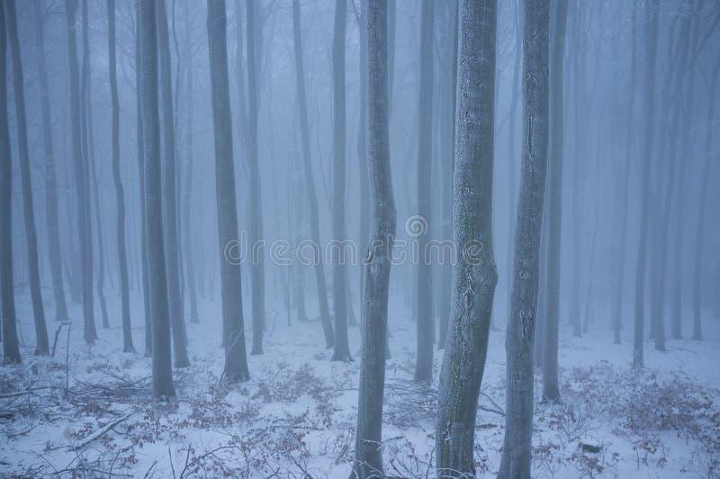 Χιονώδης δρόμος στα μικρά Καρπάθια βουνά το κρύο χειμερινό πρωί στοκ εικόνες