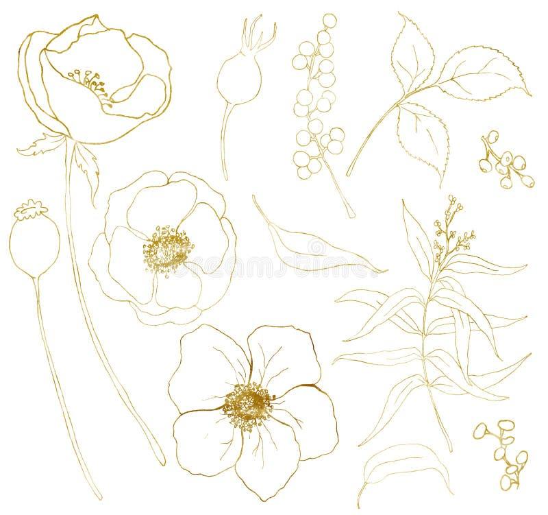 Χρυσό μεγάλο σύνολο ανθοδεσμών anemone σκίτσων Το χέρι χρωμάτισε τα λουλούδια, τα φύλλα ευκαλύπτων, τα μούρα και τον κλάδο που απ διανυσματική απεικόνιση