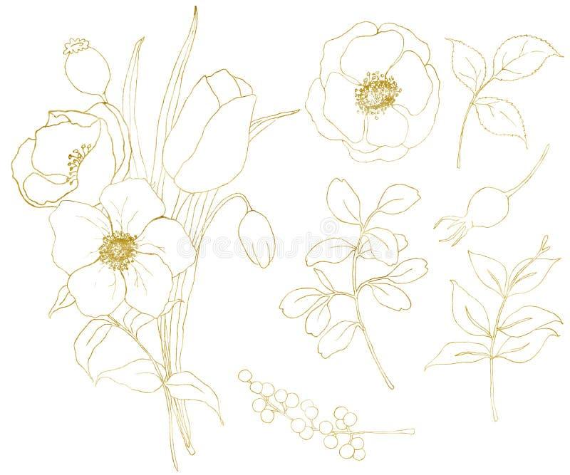 Χρυσό anemone σκίτσων και μεγάλο σύνολο τουλιπών Το χέρι χρωμάτισε τα λουλούδια, τα φύλλα ευκαλύπτων, τα μούρα και τον κλάδο που  απεικόνιση αποθεμάτων