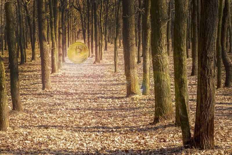 Χρυσό Bitcoin φωτίζει τα δέντρα στο δάσος στοκ φωτογραφία με δικαίωμα ελεύθερης χρήσης