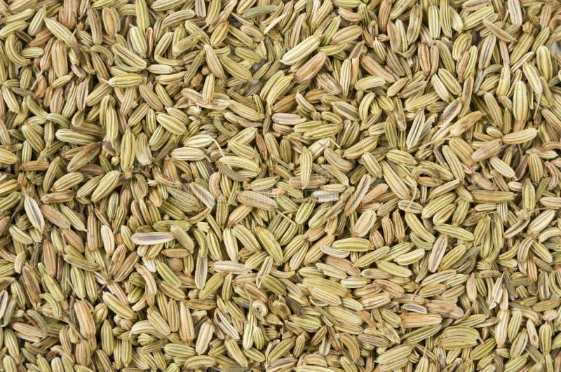 Υπόβαθρο σπόρων μαράθου Φυσική σύσταση καρυκευμάτων Φυσικά καρυκεύματα και συστατικά τροφίμων στοκ φωτογραφία