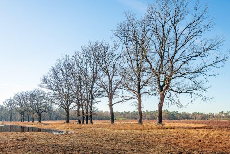 Υπόλοιπος κόσμος των δέντρων με τους γυμνούς κλάδους στην τράπεζα ενός μόνου στοκ εικόνες