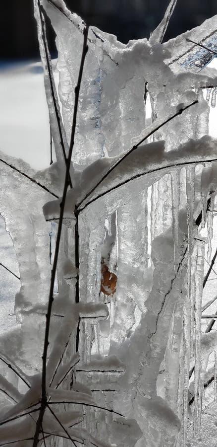 Πάγος στα δέντρα στοκ εικόνες