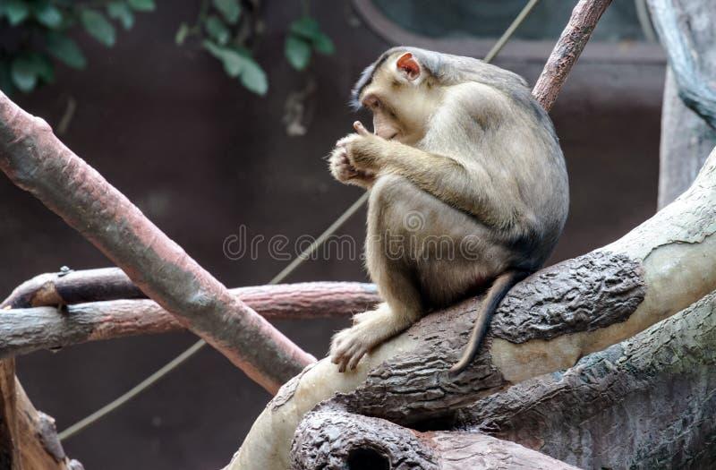 Πίθηκος συνεδρίασης στοκ φωτογραφίες με δικαίωμα ελεύθερης χρήσης