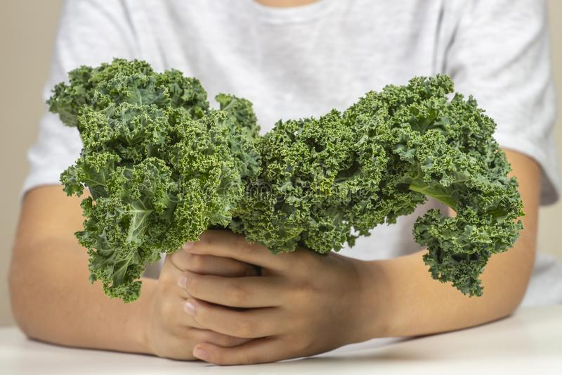 Παιδί με τα υγιή λαχανικά Αγόρι που κρατά τα φρέσκα φύλλα κατσαρού λάχανου στοκ εικόνες