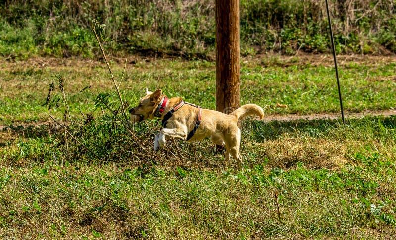 Παιχνίδια σκυλιών ελεύθερα στο πάρκο στοκ φωτογραφία με δικαίωμα ελεύθερης χρήσης