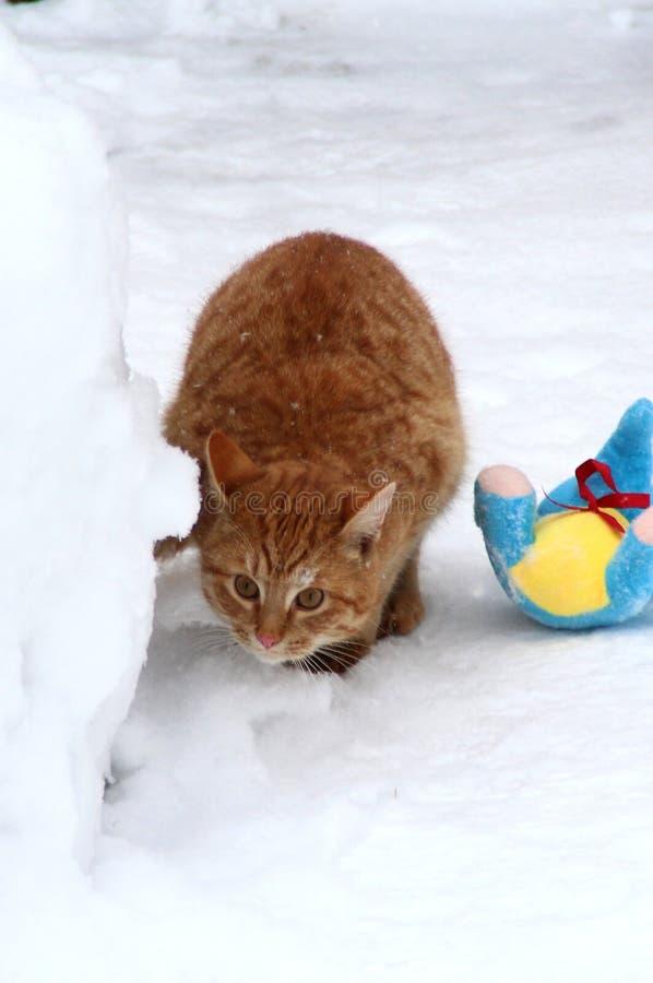 Παιχνίδι γατακιών πιπεροριζών στο χιόνι στοκ εικόνες με δικαίωμα ελεύθερης χρήσης