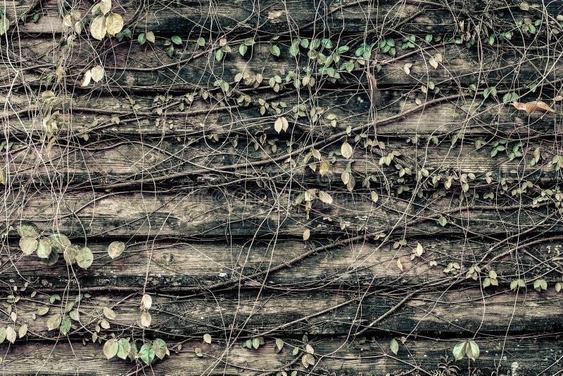 Παλαιά ξύλινη σύσταση grunge με τα φύλλα ανασκόπηση αγροτική Φύση στοκ εικόνες