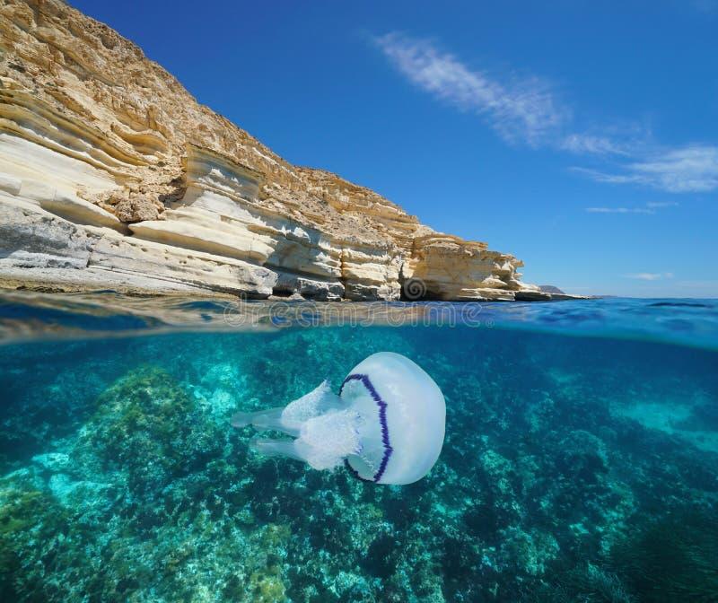 Παράκτια υποβρύχια Μεσόγειος μεδουσών απότομων βράχων στοκ εικόνες με δικαίωμα ελεύθερης χρήσης