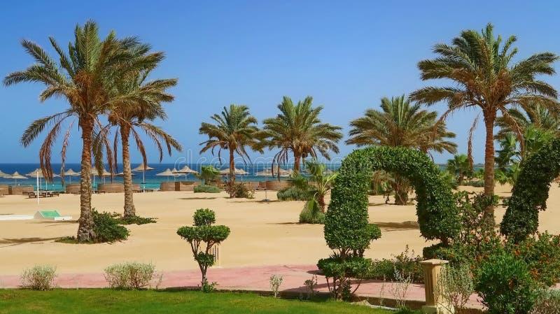 Παραλία Idylic με τους φοίνικες, Ερυθρά Θάλασσα, Αίγυπτος στοκ εικόνες