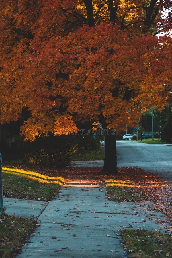 Πεζοδρόμιο γειτονιάς στην πόλη του Κάνσας φθινοπώρου στοκ φωτογραφίες με δικαίωμα ελεύθερης χρήσης
