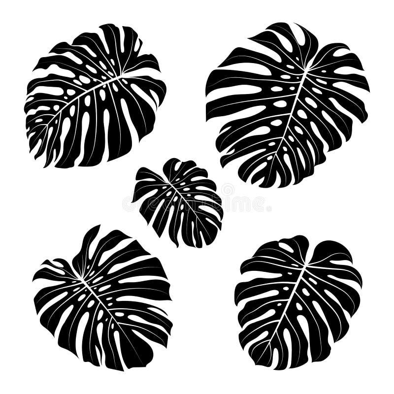 Περίληψη φύλλων Monstera, μαύρα φύλλα monstera σκιαγραφιών τροπικά επίσης corel σύρετε το διάνυσμα απεικόνισης απεικόνιση αποθεμάτων