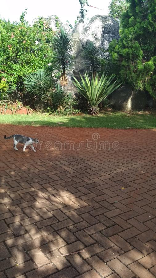 Περίπατος γατών & x28; & x29  στοκ εικόνα με δικαίωμα ελεύθερης χρήσης
