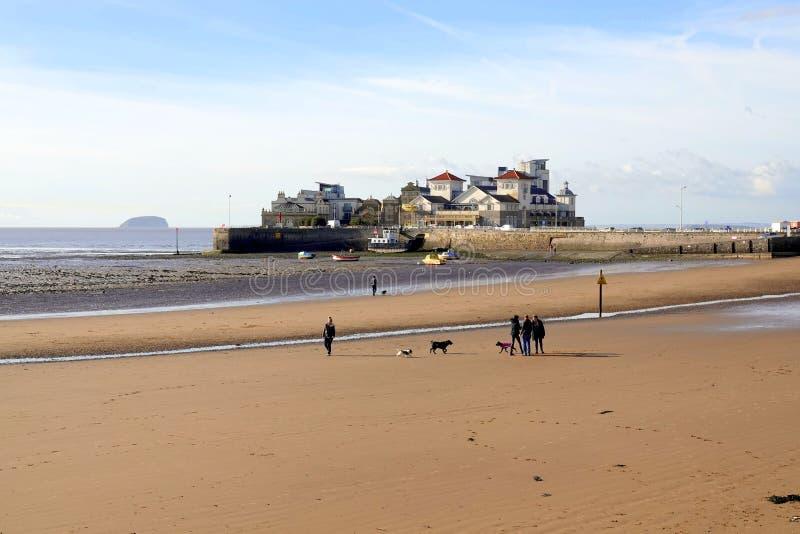Περιπατητές σκυλιών στην παραλία άμμου στοκ εικόνα