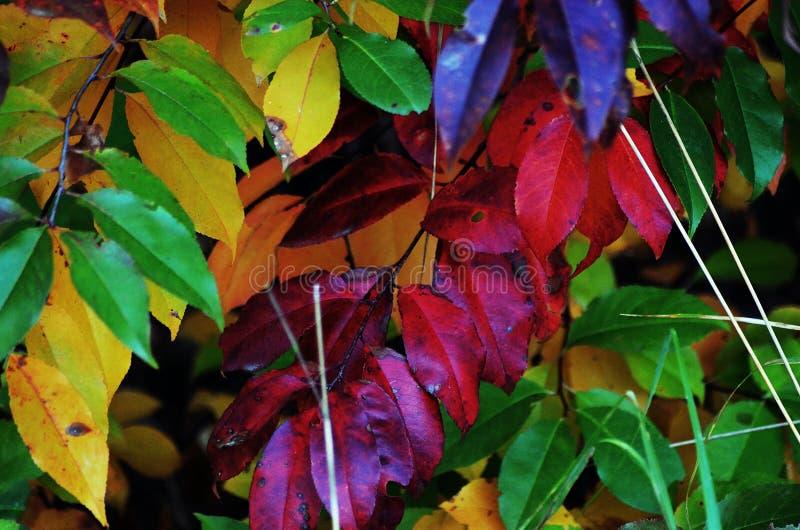 Πολωνικά χρώματα φθινοπώρου στο δάσος σε Malopolska στοκ φωτογραφία με δικαίωμα ελεύθερης χρήσης
