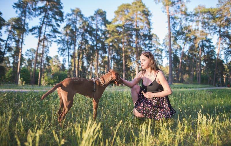 Πορτρέτο μιας συνεδρίασης κοριτσιών στη χλόη και τα σκυλιά σε ένα πάρκο στο κλίμα δέντρων στοκ εικόνα