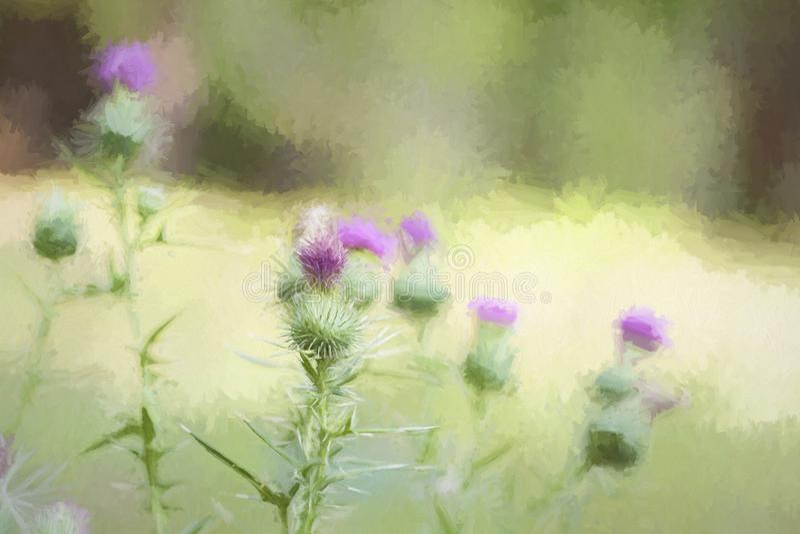 Πορφυροί οφθαλμοί κάρδων σκληρών τριχών - ψηφιακά χρωματισμένο υπόβαθρο στοκ εικόνα με δικαίωμα ελεύθερης χρήσης