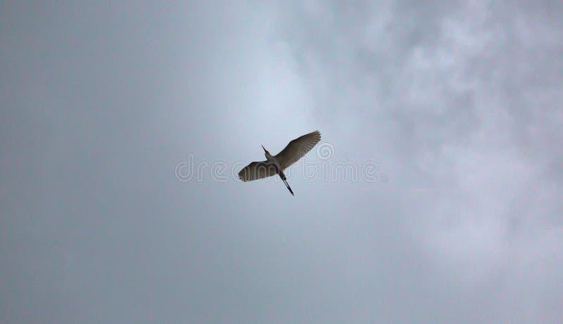 Πουλί γερανών στο νυχτερινό ουρανό στοκ φωτογραφία με δικαίωμα ελεύθερης χρήσης