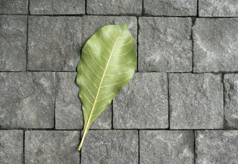 Πράσινα φύλλα που βρίσκονται στο πεζοδρόμιο στο φως του ήλιου στοκ φωτογραφίες με δικαίωμα ελεύθερης χρήσης