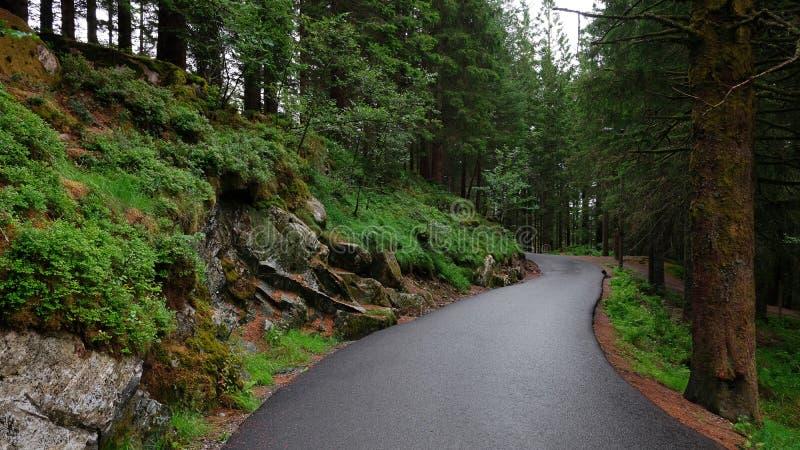 Πράσινη δασική πορεία στο υποστήριγμα Floyen, κοντά στο troll δάσος, Μπέργκεν, Νορβηγία στοκ φωτογραφίες