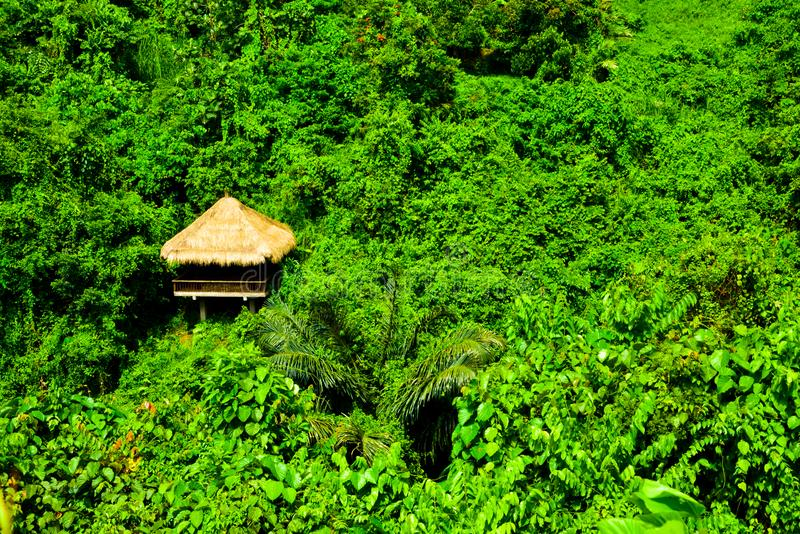 Πράσινη τροπική ζούγκλα τροπικών δασών και ρομαντική περιπέτεια άποψης καλυβών στην ανατολική Ασία στοκ εικόνα