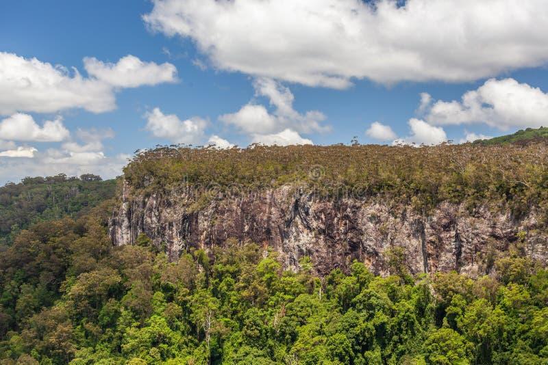 Πράσινος δασικός απότομος βράχος στο εθνικό πάρκο Springbrook στοκ εικόνα με δικαίωμα ελεύθερης χρήσης